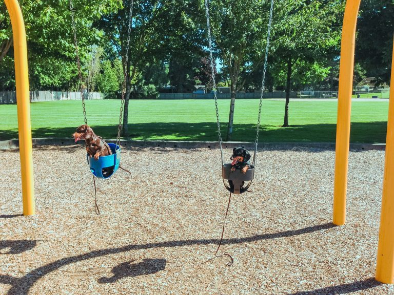 two east valley dogs on swings