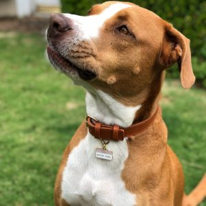 Pet ID Tag – Hello My Name is 'Good Girl'